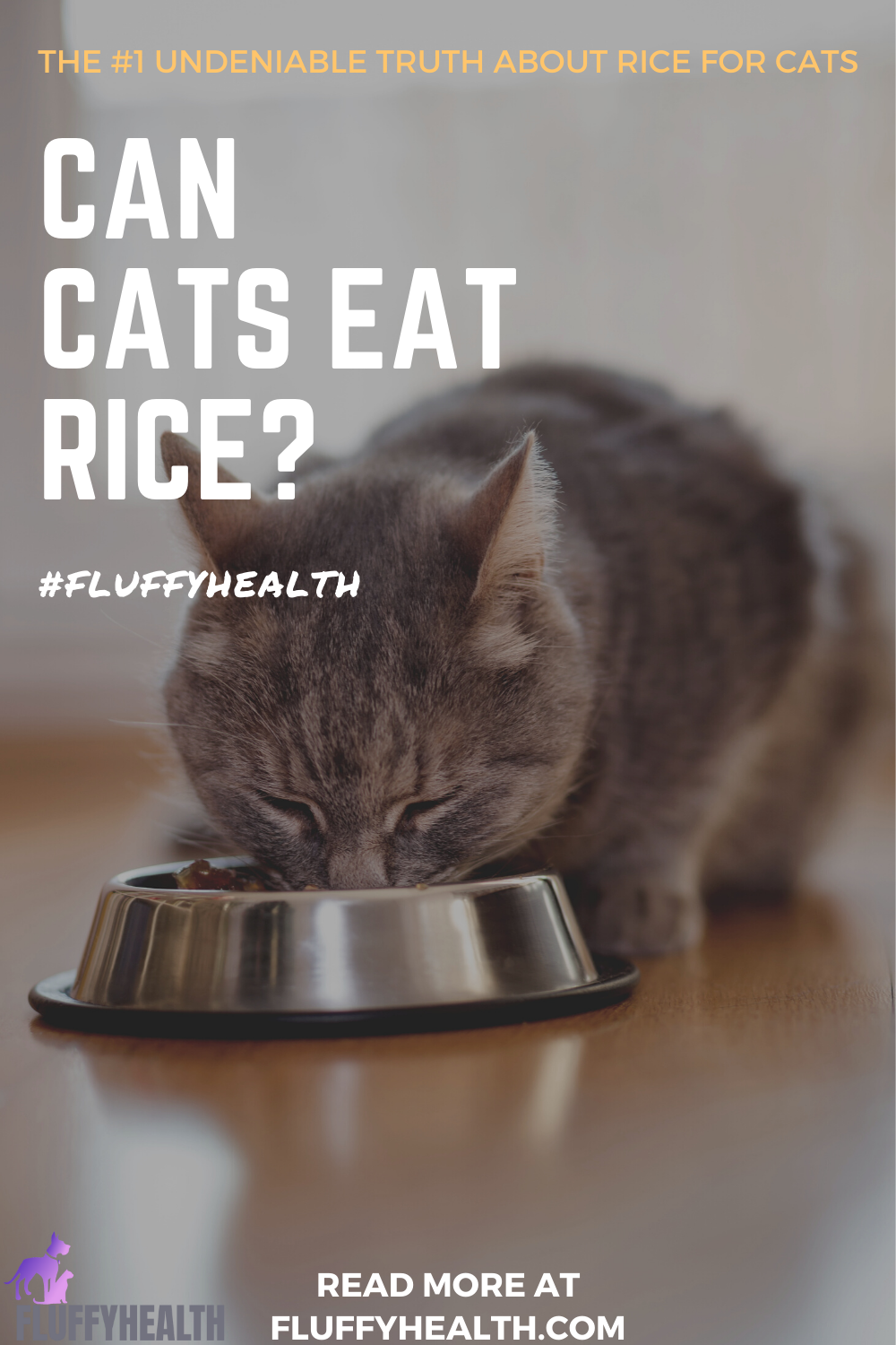 can-cats-eat-rice