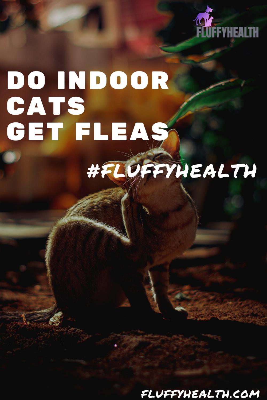 do-indoor-cats-get-fleas