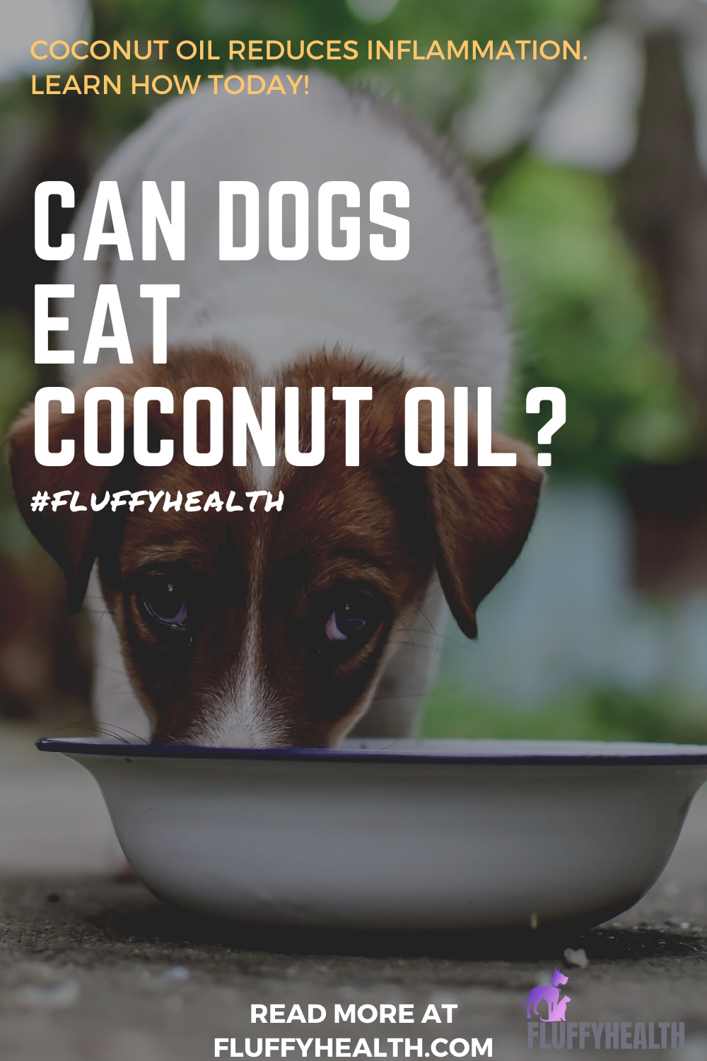 can-dogs-eat-coconut-oil