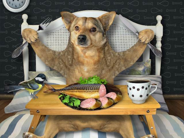 can-dogs-eat-fish-image-1