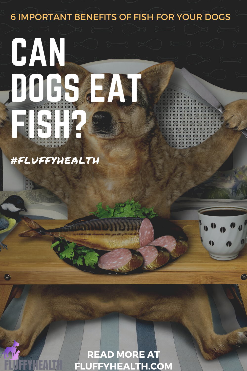 can-dogs-eat-fish-image-4